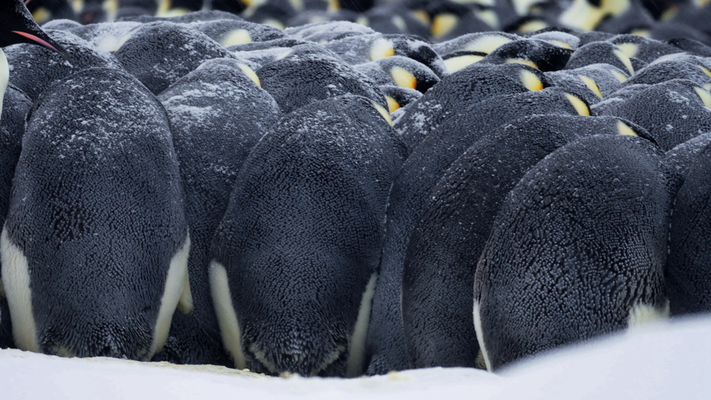 SM006-integrity-penguins-feature